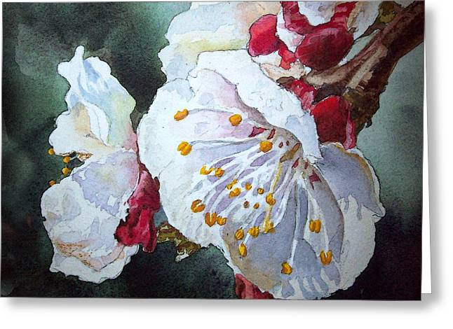 Apricots Paintings Greeting Cards - Blossoms Greeting Card by Irina Sztukowski