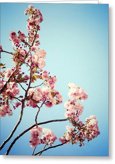 Prospects Greeting Cards - Blossoms Greeting Card by Natasha Marco
