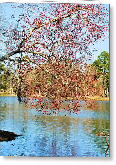 Thomasville Greeting Cards - Blossoms Over Cherokee Lake Greeting Card by Jan Amiss Photography