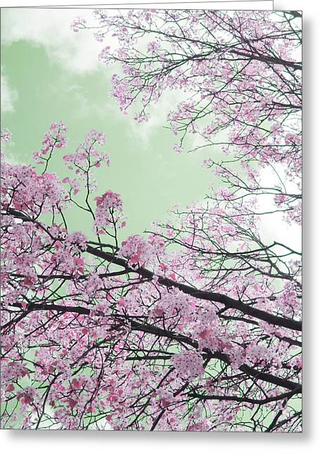 Guy Ricketts Photography And Art Greeting Cards - Blossoms Passing Fair Greeting Card by Guy Ricketts