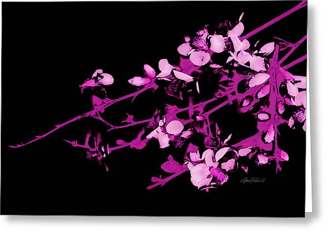 Pink Blossoms Digital Greeting Cards - Blossoms Pink on Black Greeting Card by Ann Powell