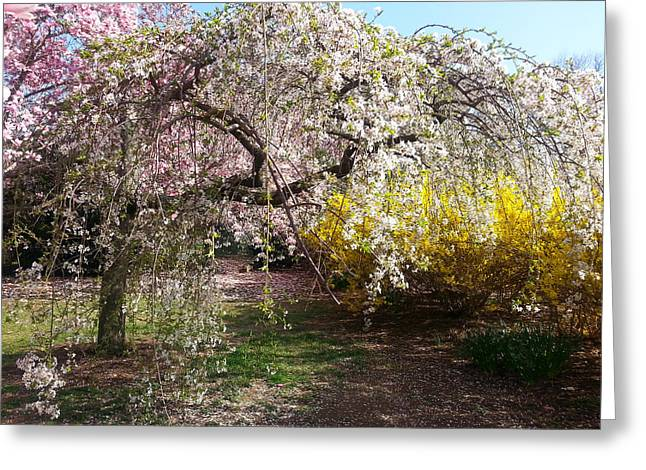 Tidal Photographs Digital Art Greeting Cards - Blossoms Potpourri I Greeting Card by Emmy Marie Vickers