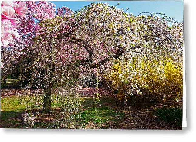Tidal Photographs Digital Art Greeting Cards - Blossoms Potpourri II Greeting Card by Emmy Marie Vickers