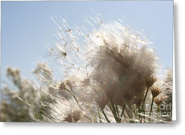 Weedy Greeting Cards - Blow me away Greeting Card by Julie Lueders