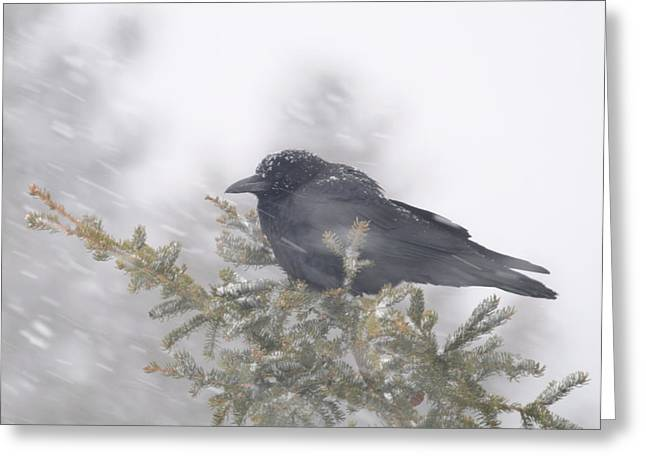 Blowin' in the wind - crow Greeting Card by Sandra Updyke
