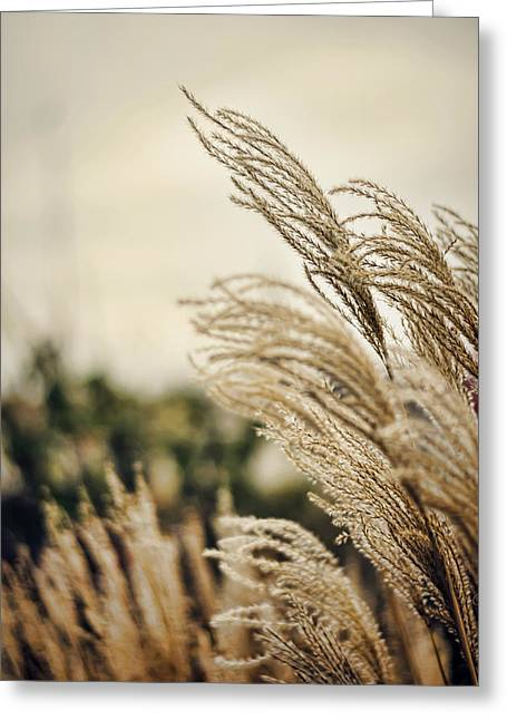 Breezy Greeting Cards - Blowing in the Wind Greeting Card by Heather Applegate