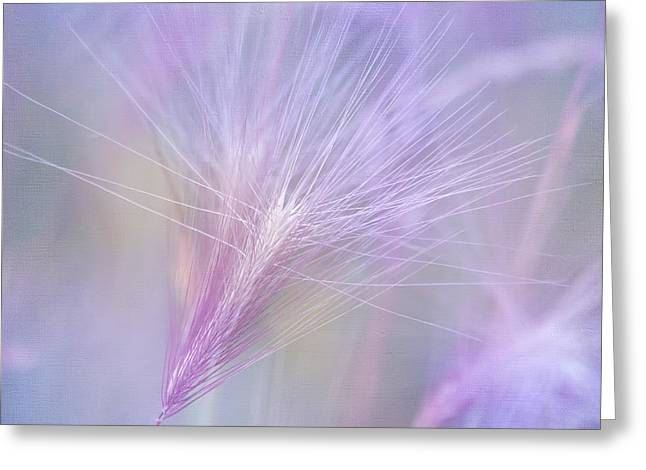 Blowing in the Wind Greeting Card by Kim Hojnacki