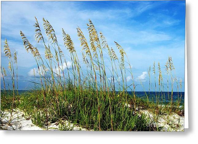Sea Oats Greeting Cards - Blowing In The Wind Greeting Card by Mel Steinhauer