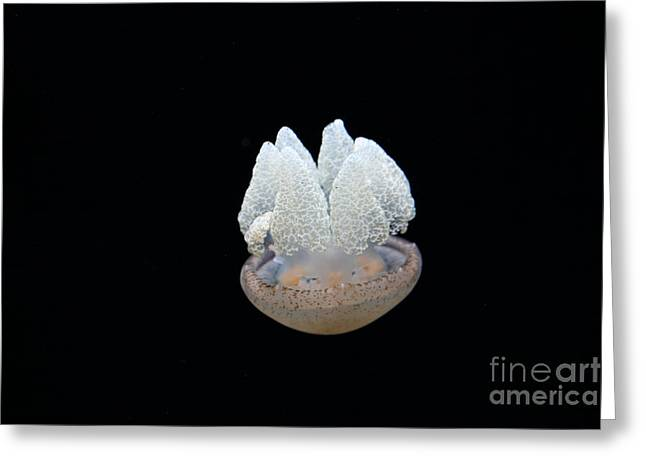 Snorkel Greeting Cards - Blubber Jelly Fish 5D24960 Greeting Card by Wingsdomain Art and Photography