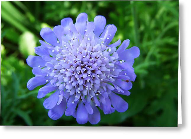 Blue Greeting Card by Aimee L Maher Photography and Art