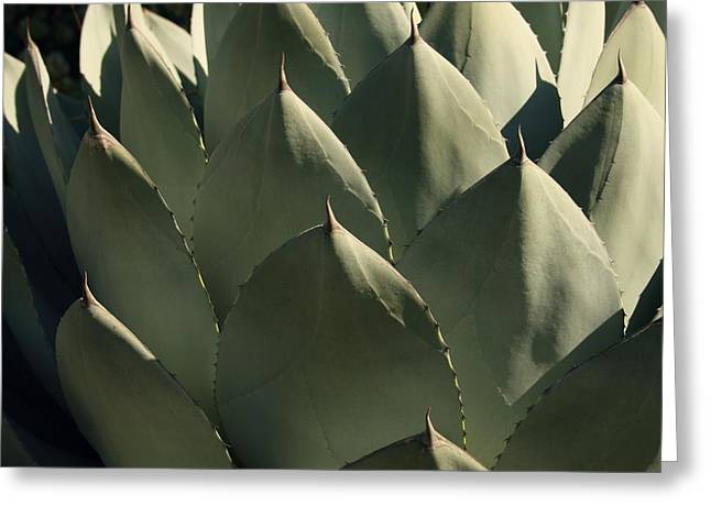 Rosette Greeting Cards - Blue Aloe Greeting Card by Ellen Henneke