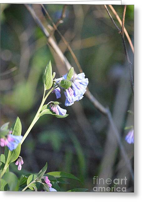 Indiana Flowers Greeting Cards - Blue Greeting Card by Alys Caviness-Gober
