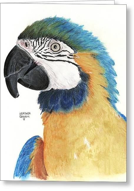 Macaw Art Greeting Cards - Blue and Gold Macaw Greeting Card by Heather Gessell