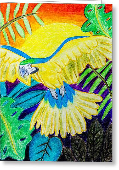 Blue And Gold Macaw Greeting Card by Pati Photography