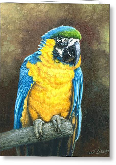 Tropical Wildlife Greeting Cards - Blue and Gold Macaw Greeting Card by Paul Krapf