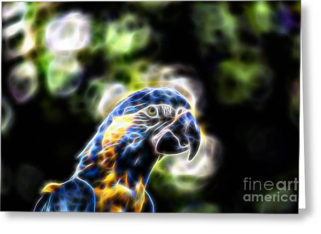 Macaw Greeting Cards - Blue and Gold Macaw V4 Greeting Card by Douglas Barnard