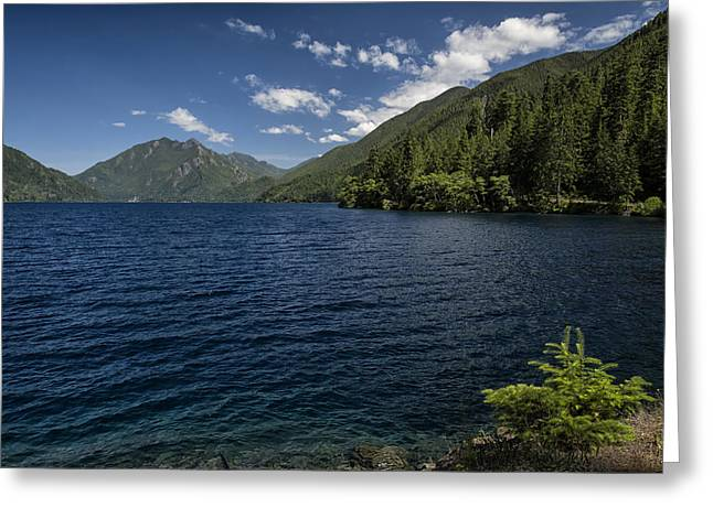 Lake Crescent Greeting Cards - Blue and Green Greeting Card by Joan Carroll