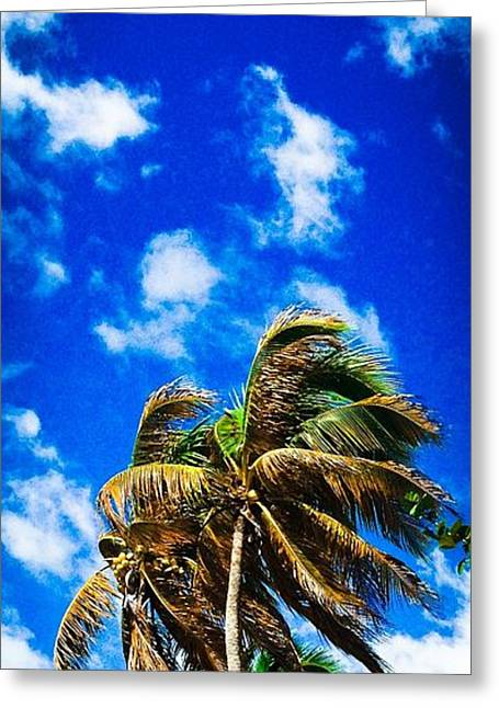 Rincon Beach Greeting Cards - Blue and palm Greeting Card by Loretta Cassiano