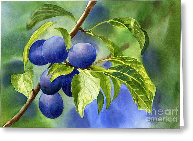Fruit Tree Art Greeting Cards - Blue and Purple Damson Plums on a Branch Greeting Card by Sharon Freeman