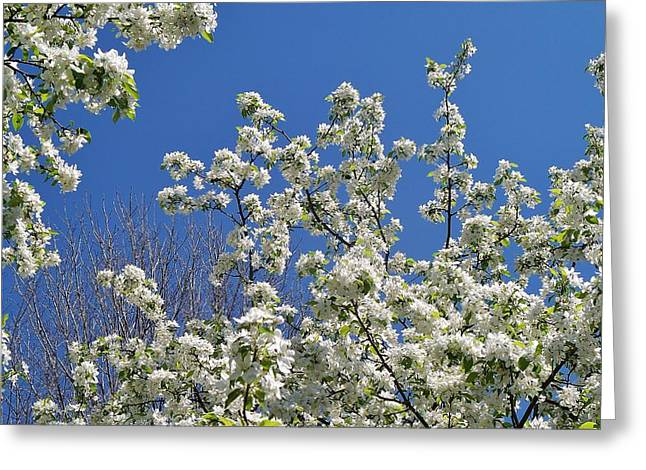 Blue And White Greeting Card by Steven Stutz
