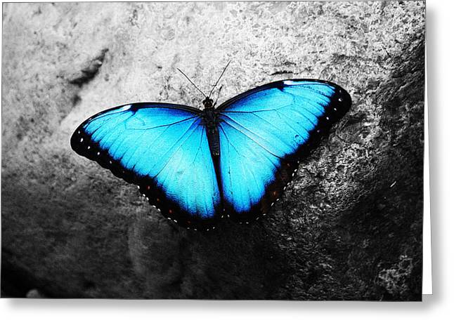 Blue Greeting Cards - Blue angel butterfly Greeting Card by Sumit Mehndiratta