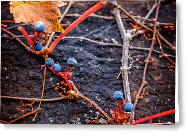 Grapevine Autumn Leaf Greeting Cards - Blue Autumn Ivy Berries on a Stone Wall Greeting Card by Chris Bordeleau