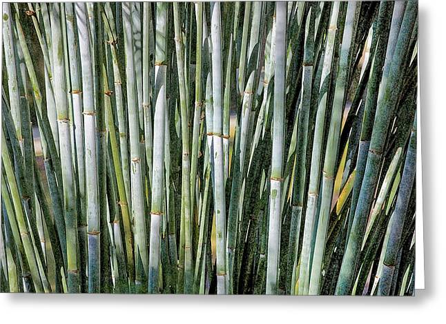 Historic Home Greeting Cards - Blue Bamboo DB Greeting Card by Rich Franco