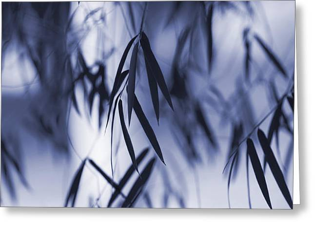 Blue Bamboo Greeting Card by Tim Gainey