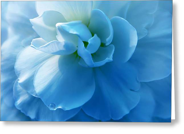 Blue Begonia Flower Greeting Card by Jennie Marie Schell