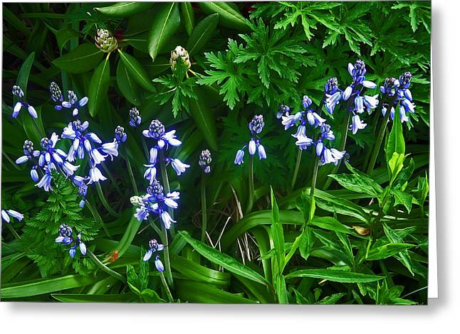 Plant Greeting Cards - Blue Bells Greeting Card by Aimee L Maher Photography and Art