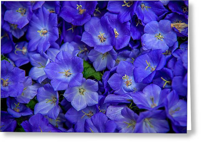 Jenny Rainbow Photographs Greeting Cards - Blue Bells Carpet. Amsterdam Floral Market Greeting Card by Jenny Rainbow
