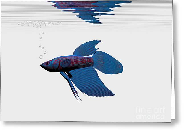 Betta Greeting Cards - Blue Betta Greeting Card by Corey Ford