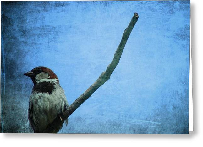 Sparrow On Blue Greeting Card by Dan Sproul