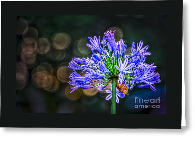 Blue Blooms Greeting Card by Marvin Spates