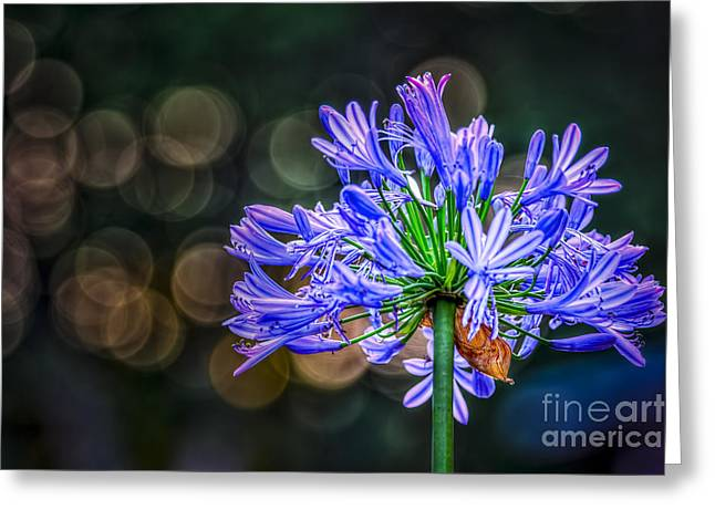 Greeting Cards - Blue Blooms Greeting Card by Marvin Spates
