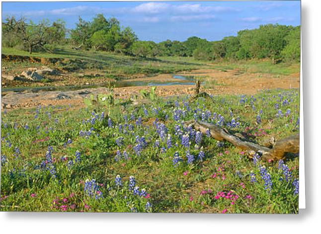 Plantlife Greeting Cards - Blue Bonnets In Hill Country, Willow Greeting Card by Panoramic Images