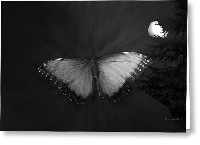 Pinks And Purple Petals Greeting Cards - Blue Butterfly Ascending BW Greeting Card by Thomas Woolworth