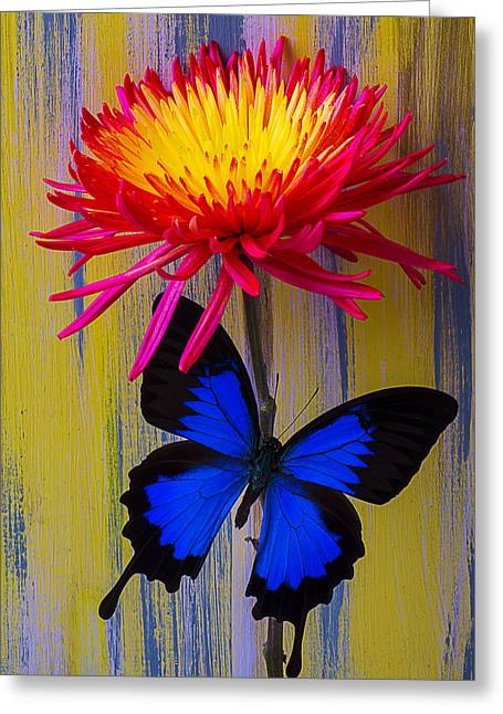 Blue Butterfly On Fire Mum Greeting Card by Garry Gay