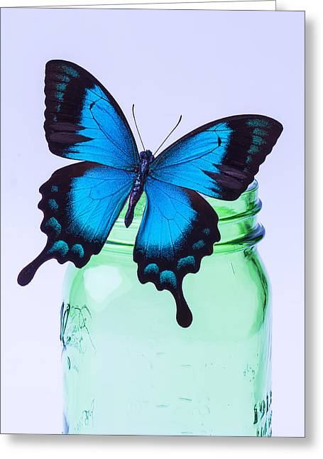 Jars Greeting Cards - Blue Butterfly On Green Jar Greeting Card by Garry Gay