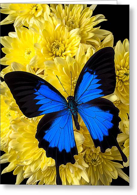 Blue Butterflies Greeting Cards - Blue butterfly on poms Greeting Card by Garry Gay