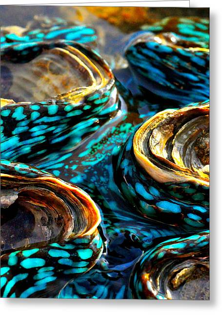 Get Well Card Framed Prints Greeting Cards - Blue Clams Greeting Card by Casey Herbert
