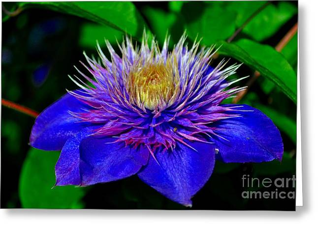Garden Greeting Cards - Blue Clematis Greeting Card by Mandy Judson