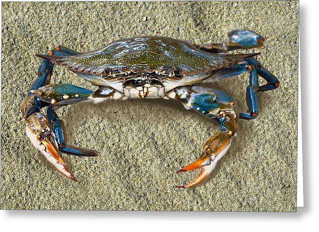 Blue Crab Confrontation Greeting Card by Sandi OReilly