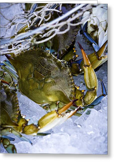 Louisiana Pyrography Greeting Cards - Blue Crab Net Greeting Card by CJ Bryant