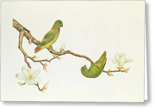 Dynasty Greeting Cards - Blue Crowned Parakeet Hannging on a Magnolia Branch Greeting Card by Chinese School