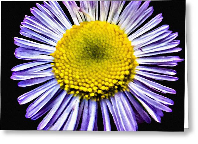 Blue Daisy Painting Greeting Card by Bob and Nadine Johnston