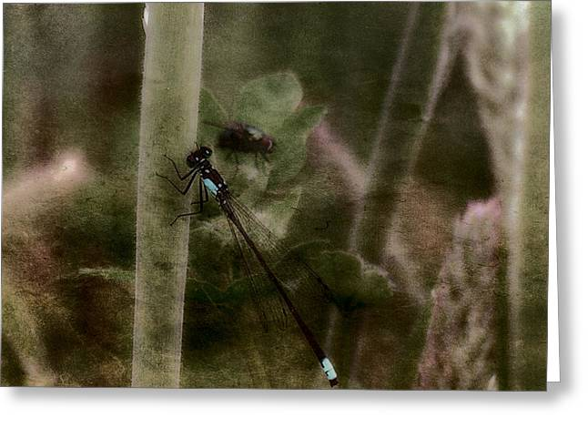 Damselfly Greeting Cards - Blue Damselfly and Guest Greeting Card by Bonnie Bruno