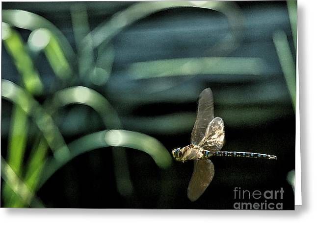 Green Darner Dragonflies Greeting Cards - Blue Darner Dragonfly and Reeds Greeting Card by Belinda Greb