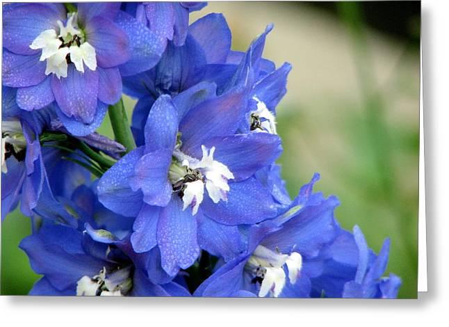 Blue Delphinium Flower Greeting Card by Bonita Hensley