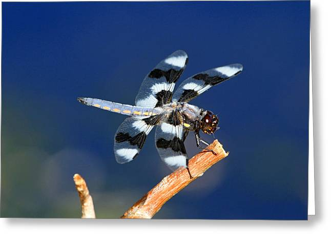 Dragonflies Greeting Cards - Blue Greeting Card by Donna Kennedy